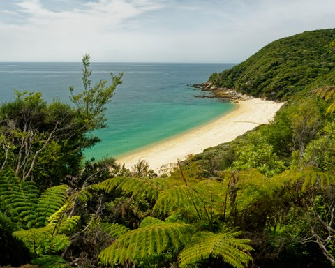 New Zealand's Abel Tasman National Park